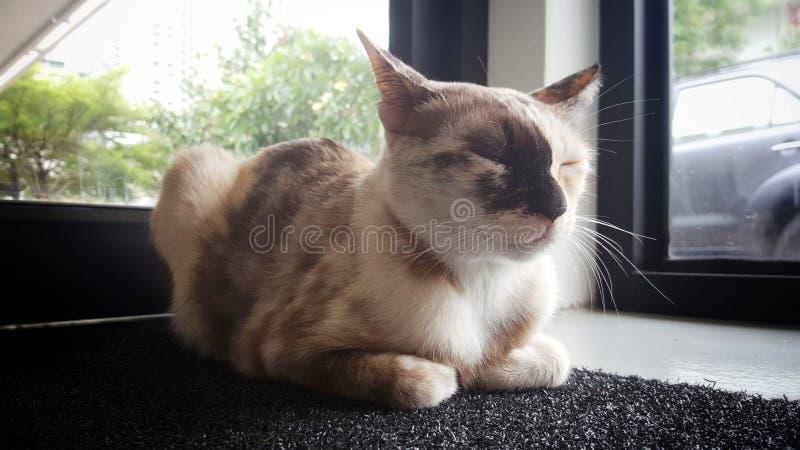 Le chat de sommeil photographie stock