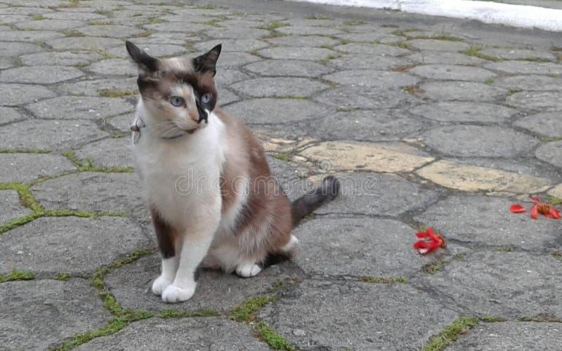 Le chat de territorialist photo stock
