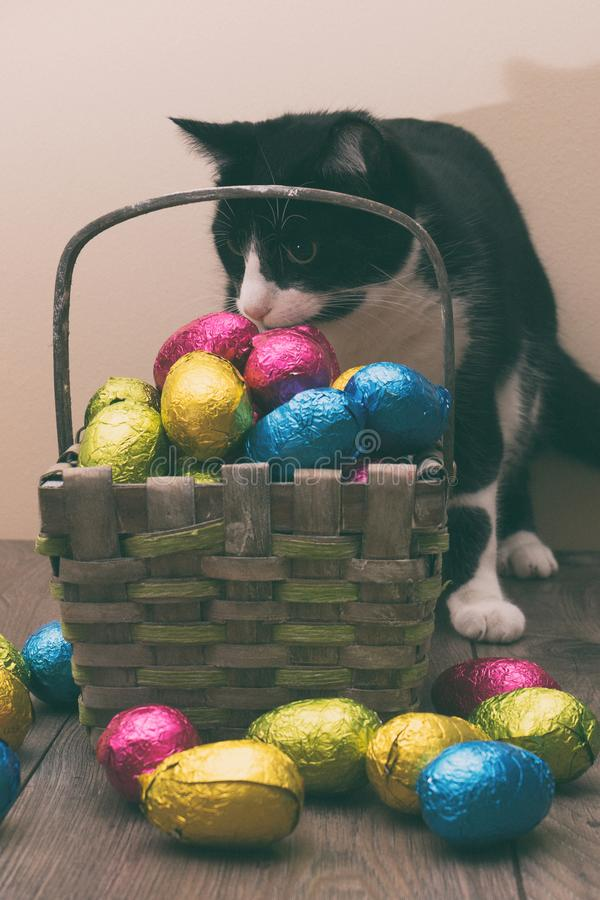 Le chat derrière un panier de paille a rempli d'oeufs de chocolat de Pâques enveloppés en feuille d'étain colorée photos libres de droits
