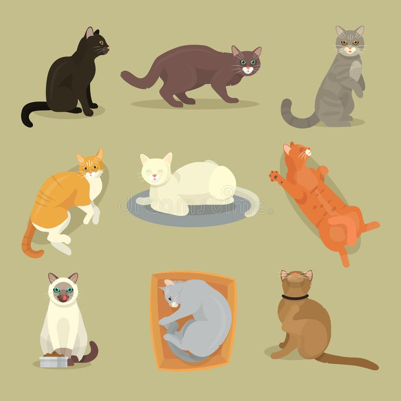 Le chat différent multiplie l'illustration féline de minou d'animal familier de jeu de caractères cattish animal mignon mignon de illustration stock