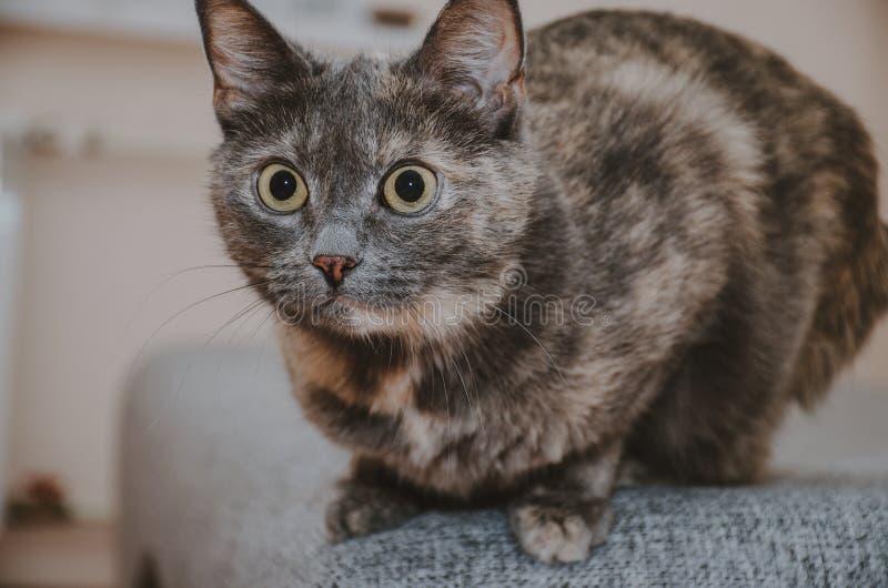 Le chat dispose à sauter photos libres de droits