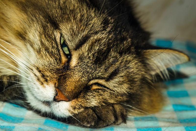 Le chat dort image stock