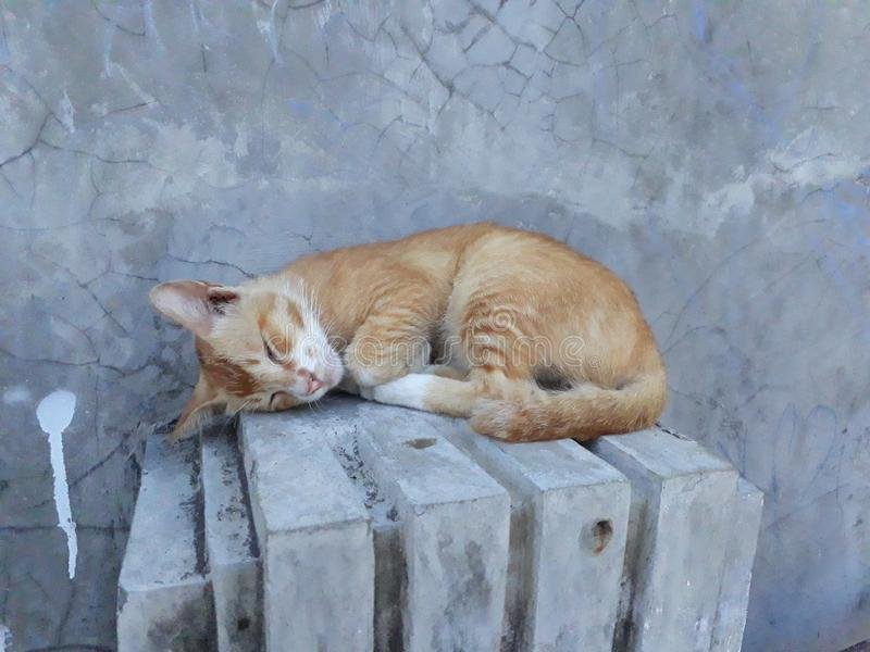 Le chat dort images stock