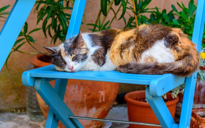 Le chat dort sur la chaise photographie stock