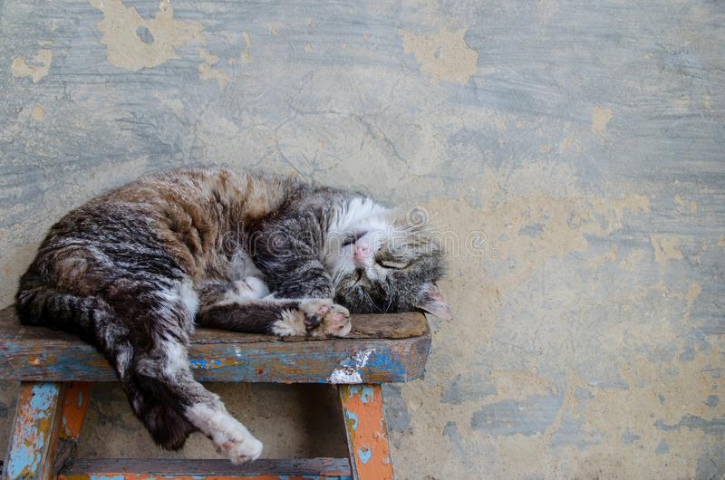 Le chat dort sur un banc photo libre de droits