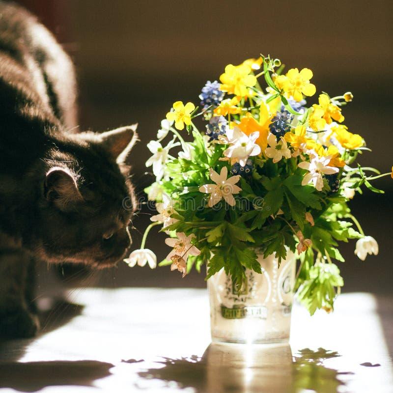 Le chat et le bouquet des fleurs images libres de droits