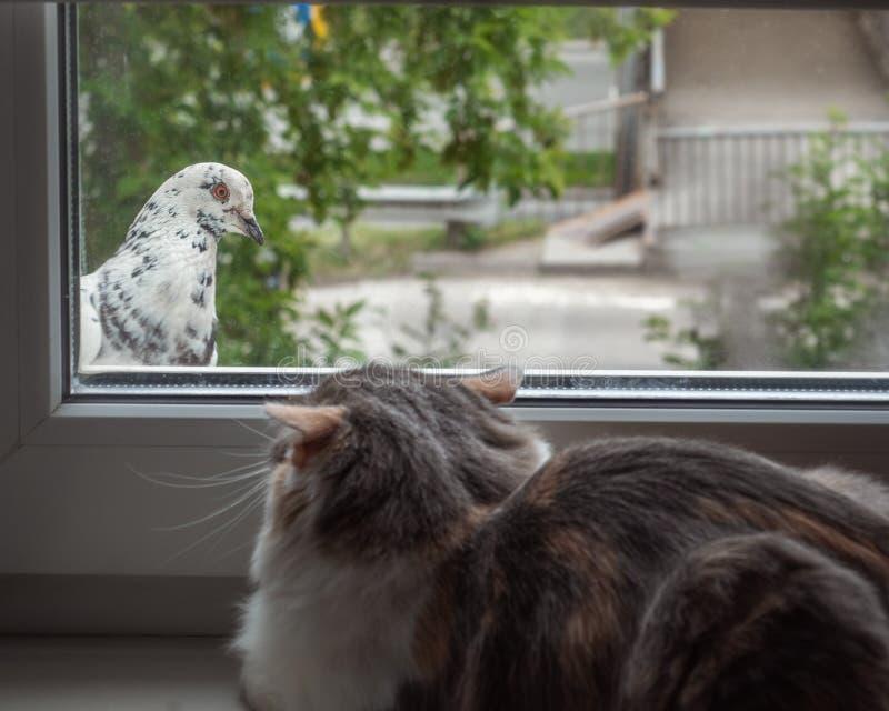 Le chat et le chaton regardent l'un l'autre par la fenêtre photographie stock libre de droits