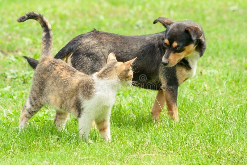 Le chat et le chien se tiennent sur l'herbe et regardent dans l'un l'autre des yeux du ` s Belle amitié animale photo libre de droits