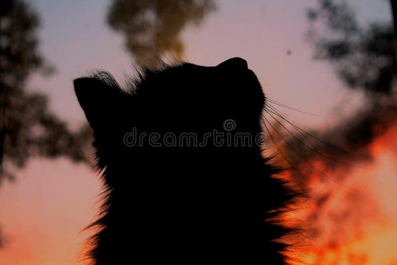 Le chat et le coucher du soleil images stock