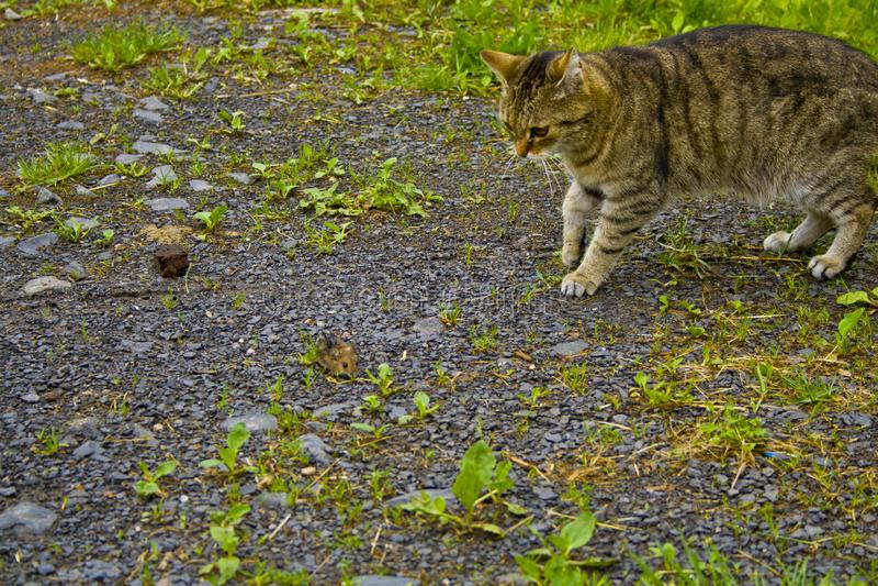 Le chat et la souris s'observent images stock