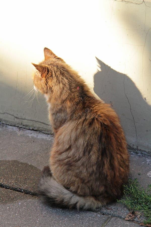 Le chat et son ombre photographie stock