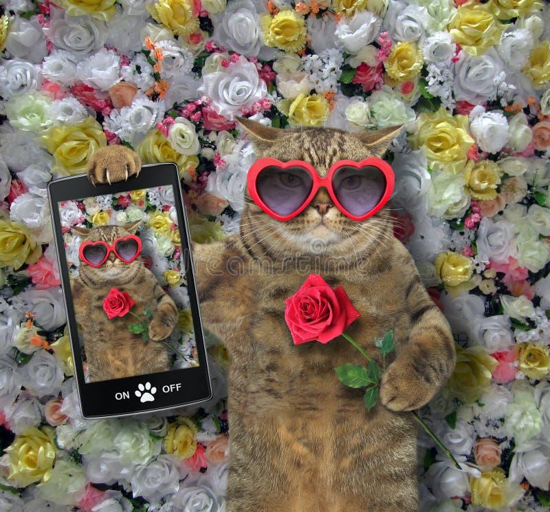 Le chat a fait un selfie avec une rose photos stock