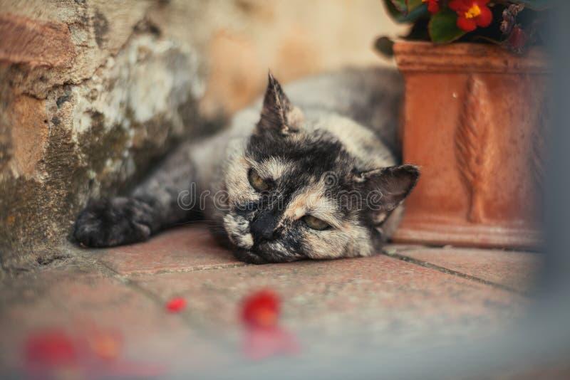 Le chat gras et drôle dort au sol et près d'un pot de fleurs photo stock