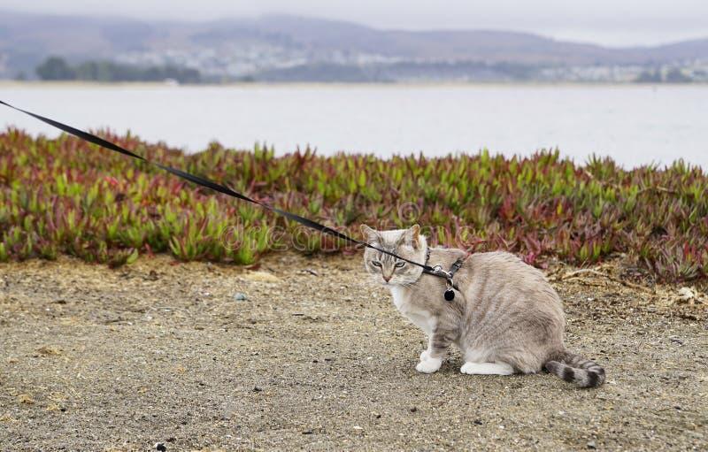 Le chat grincheux de plage photo libre de droits