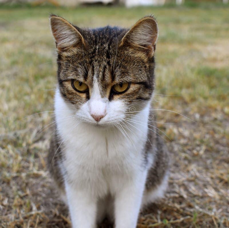 Le chat grincheux se repose et des montres images libres de droits