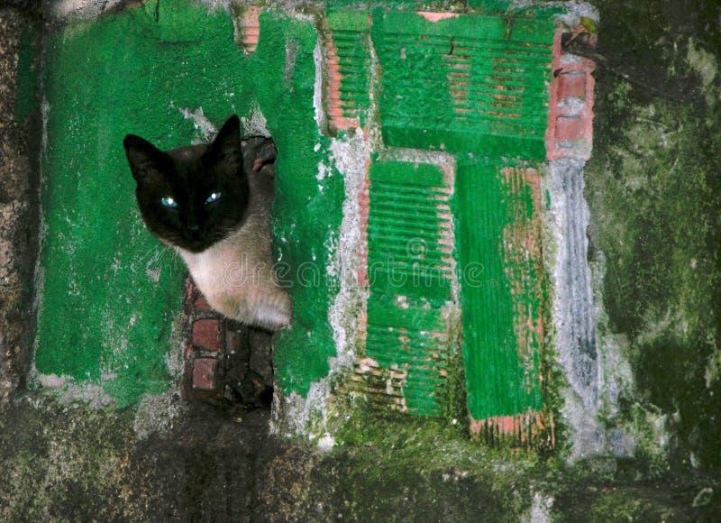 Le chat gris avec la tête noire dans la fente de façade regarde des environs photos libres de droits