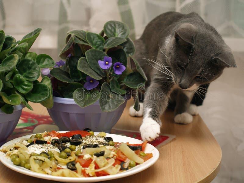 Le chat gris vole la nourriture de la plaque, se cachant photographie stock