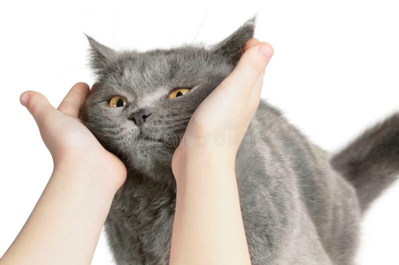Le chat heureux est satisfait avec la main photographie stock
