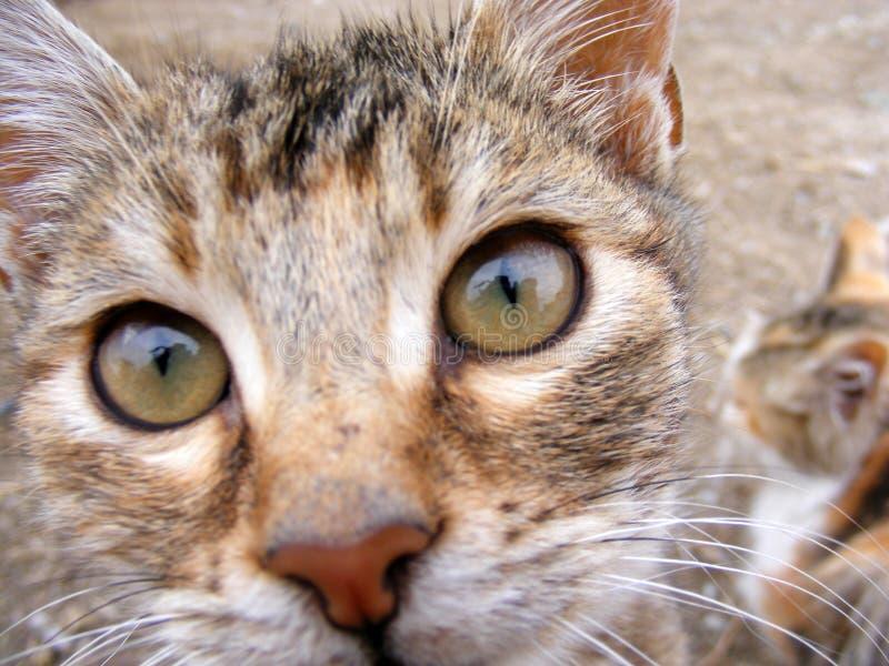 Le chat intéressant et beau de rue décrit approprié à faire de la publicité et conçoit image libre de droits