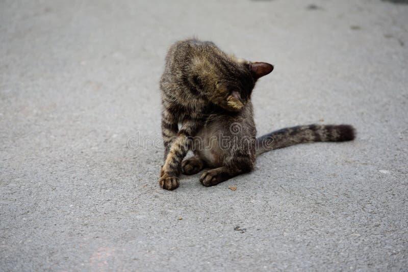 Le chat lèche photos libres de droits