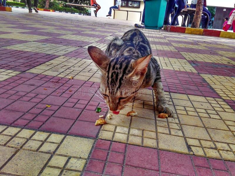 Le chat l'en public images stock