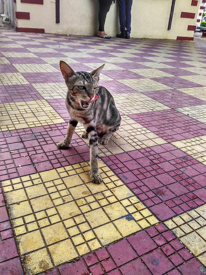 Le chat l'en public photo libre de droits