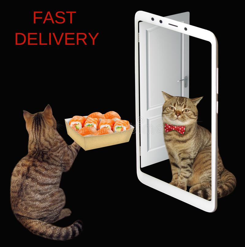 Le chat livre la boîte de sushi photographie stock libre de droits