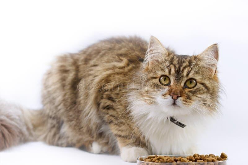 Le chat mange photo libre de droits
