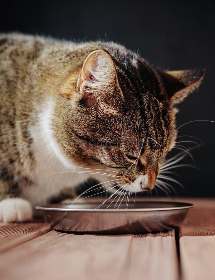Le chat mangent du repas, chat se repose près de la cuvette avec la nourriture photos libres de droits