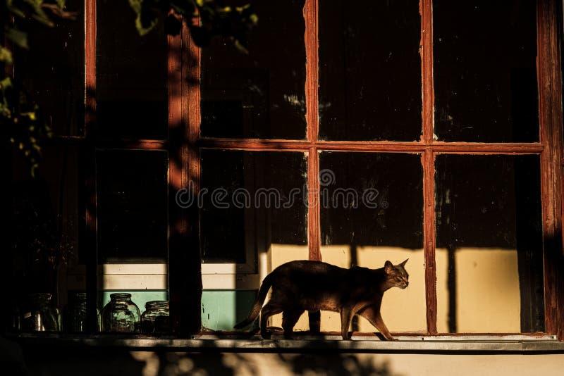 Le chat marche sur le rebord de la fenêtre photos stock