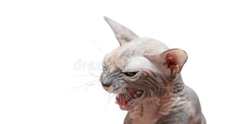 Le chat mauvais photographie stock