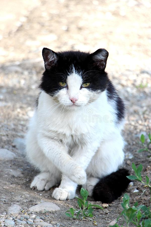 Le chat mauvais a inventé quelque chose se repose image stock