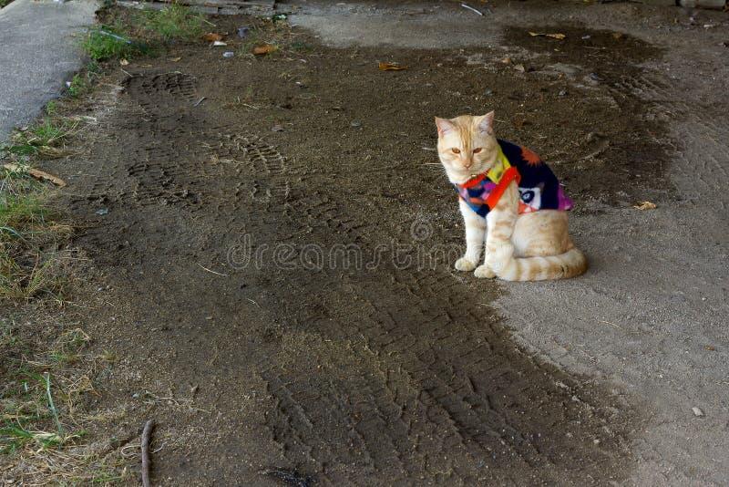 Le chat mignon étaient chandail images stock