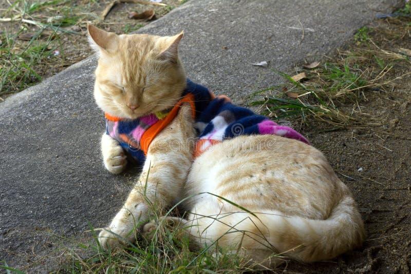 Le chat mignon étaient chandail et se reposent images libres de droits