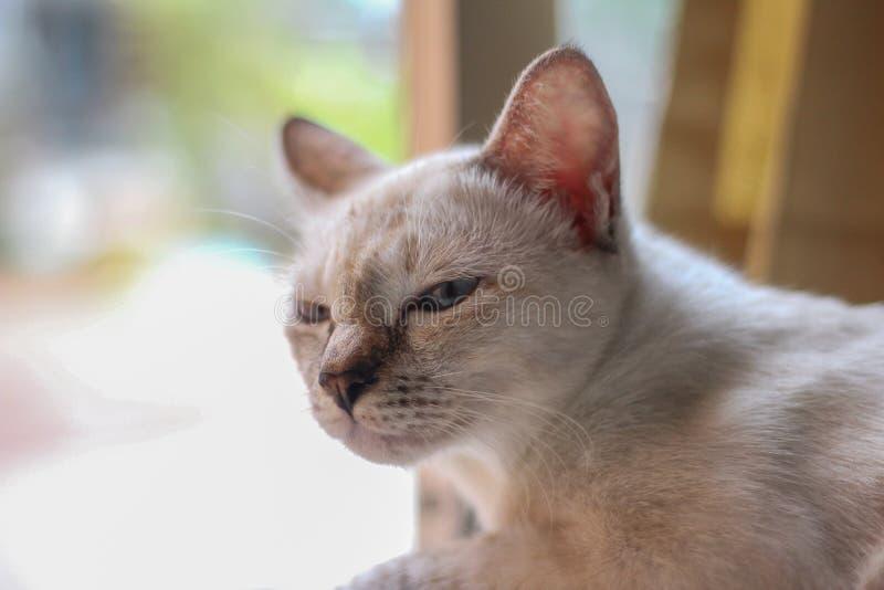Le chat mignon avec détendent le visage images stock
