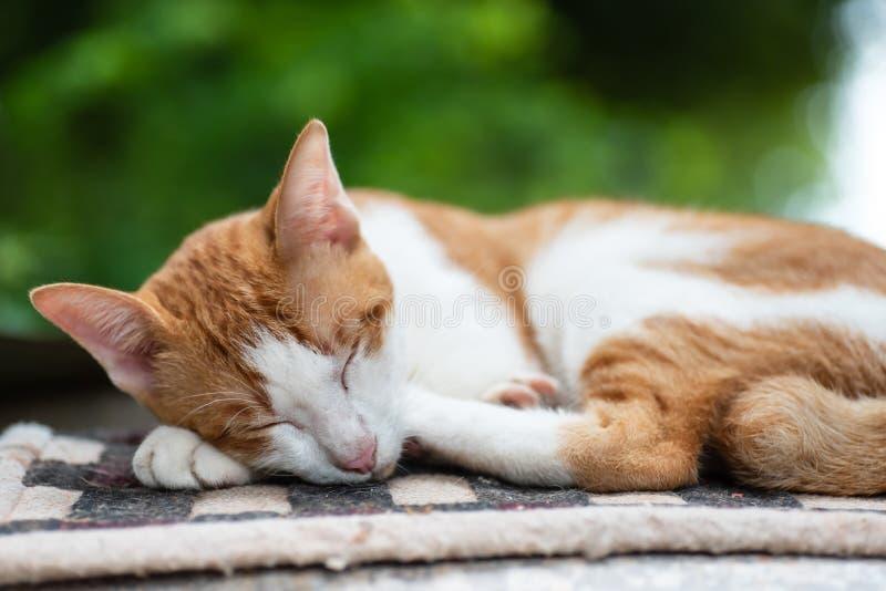 Le chat mignon dort sur le tapis image libre de droits