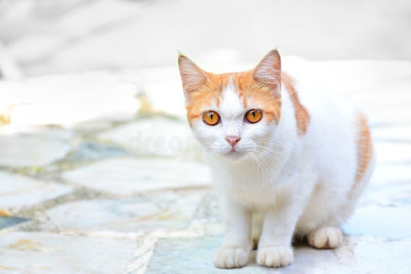 Le chat mignon ont les yeux jaunes se repose là regardant quelque chose soupçonneusement sur le plancher de marbre photo stock