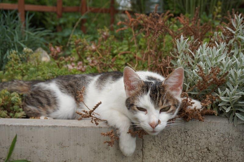 Le chat mignon se trouve dans un lit de fleur et entièrement détendu photos stock