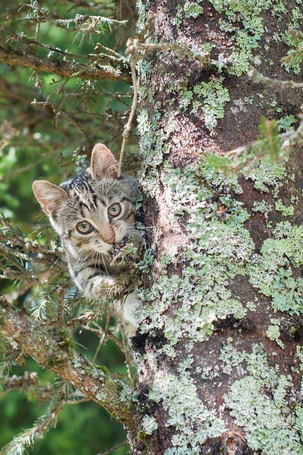 Le chat mignon se trouve sur l'arbre, petit chaton sur une branche, les animaux familiers mignons ont trois couleurs sur un fond  image libre de droits
