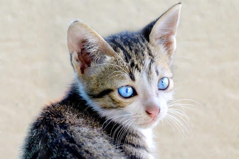 Le chat mignon a tourné sa tête photo stock
