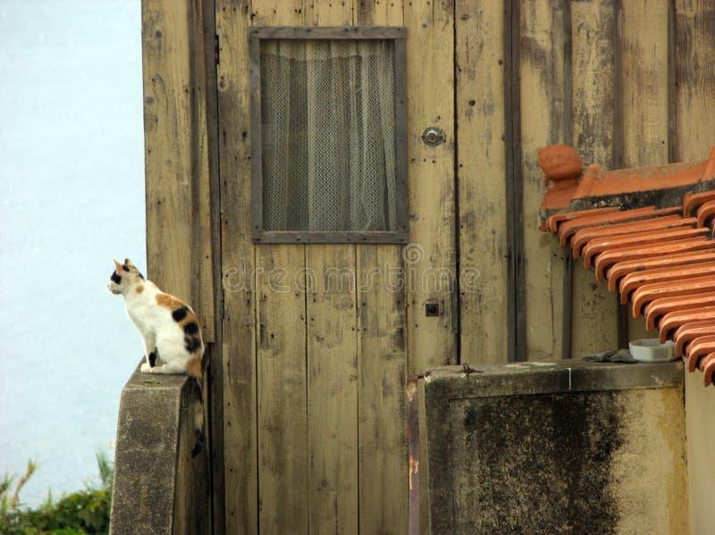 Le chat multicolore blanc repose et regarde des environs photo stock