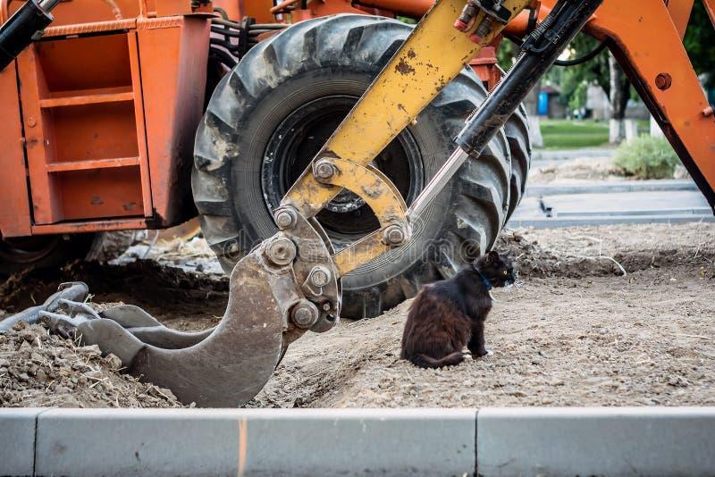 Le chat noir, affamé, sans abri lave sous le seau d'une excavatrice photographie stock libre de droits