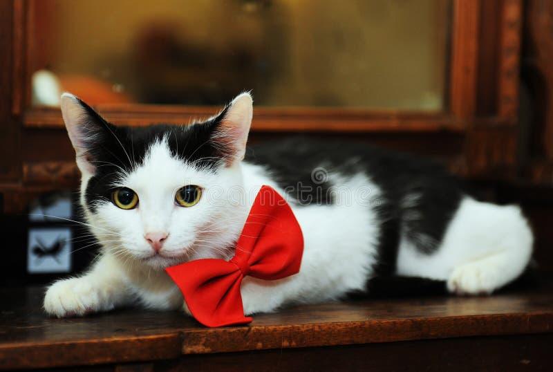 Le chat noir et blanc dans un noeud papillon rouge se trouve imposant sur un miroir de vintage photos libres de droits