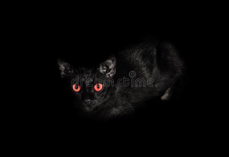 Le chat noir, fixement se ferment des yeux avec une couleur rouge étant regarder I photographie stock libre de droits