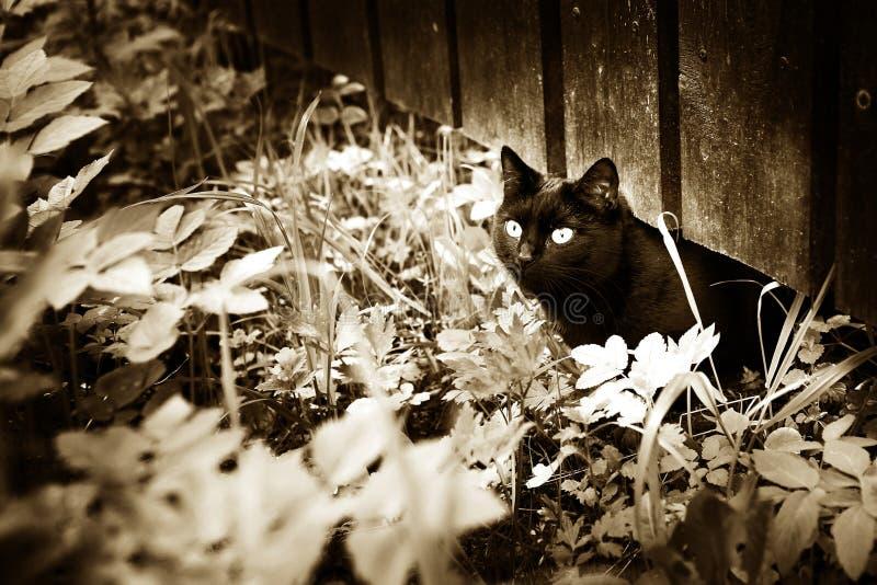 Le chat noir sur le fond d'été de village d'herbe et de barrière noircissent photos libres de droits
