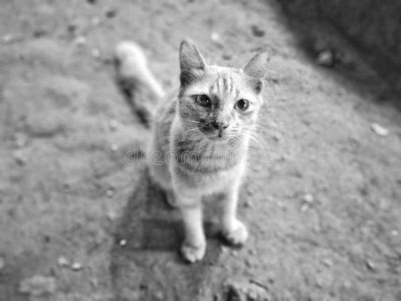 Le chat non raciste photographie stock libre de droits