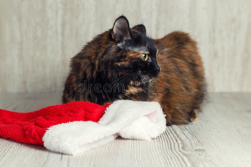 Le chat offensé se trouvant près du chapeau de Noël et a tourné loin mécontent images libres de droits