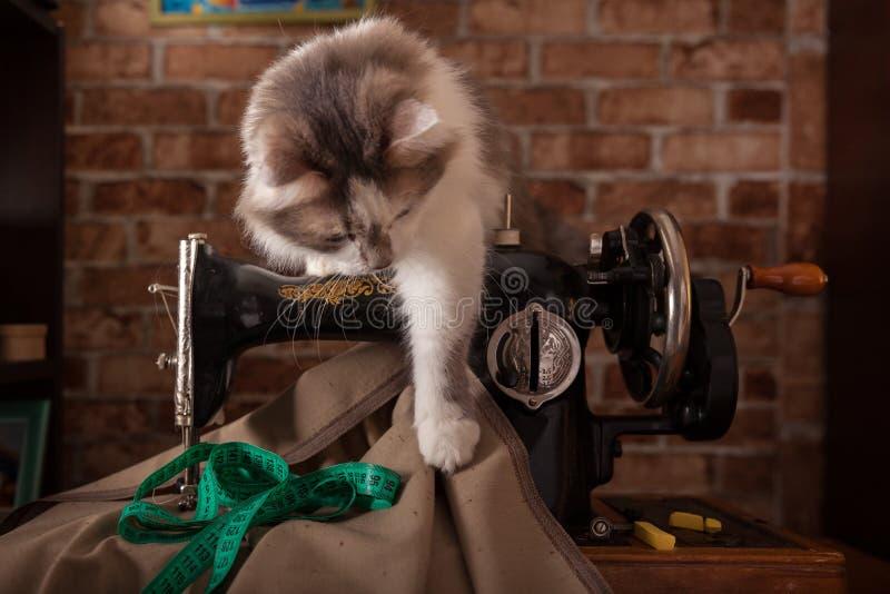 Le chat pelucheux écoute et vole la bande de mesure verte Vieille machine à coudre image libre de droits