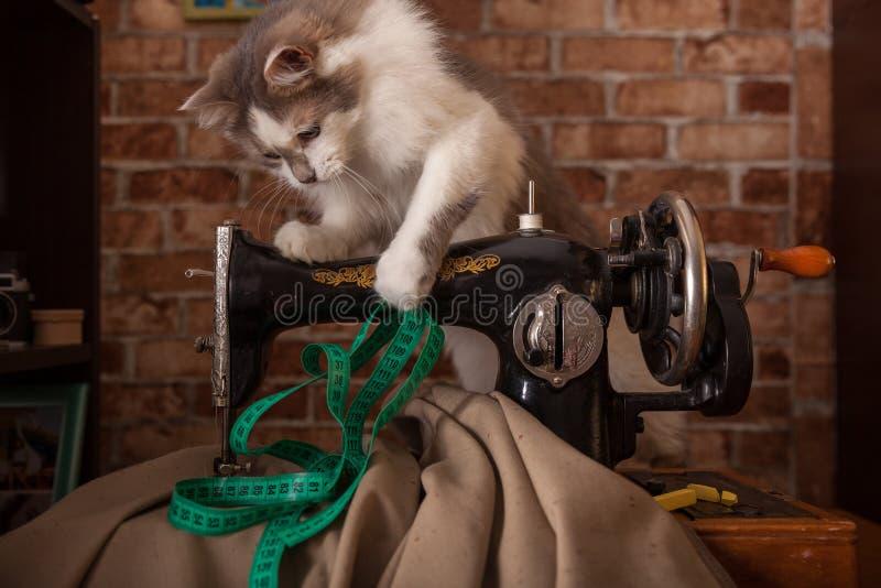 Le chat pelucheux écoute et vole la bande de mesure verte Vieille machine à coudre image stock