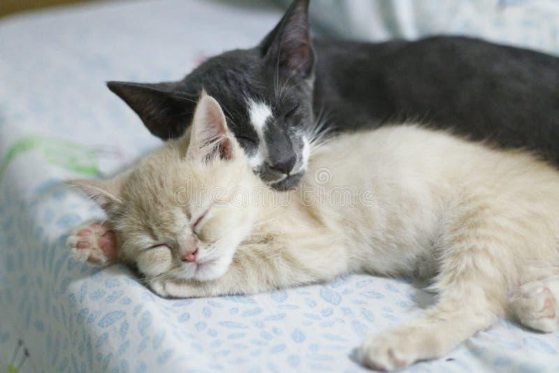 Le chat prennent un repos ensemble image stock
